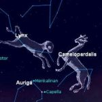 Star Constellation Facts: Lynx
