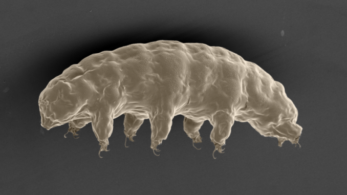 Tardigrade Genes Could Protect Astronauts From Radiation